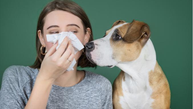 Quem tem alergia pode conviver com um animal de estimação?